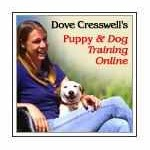 dove dog training online